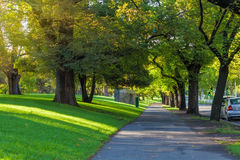 Trees alley footpath St Kilda Road Royalty Free Stock Photography