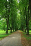 Trees alley. In the Nesvizh park, Belarus Royalty Free Stock Photography