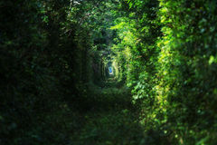 Trees alley Royalty Free Stock Photography