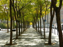 Trees alley Stock Images