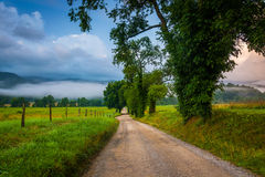 Trees Along A Dirt Road, On A Foggy Morning At Cade S Cove, Grea Royalty Free Stock Photos