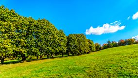 Trees along a country lane under blue sky stock photos
