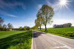 Trees along a country road Stock Photos