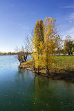 Trees along Lake in the autumn Royalty Free Stock Photography