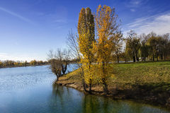 Trees along Lake in the autumn Stock Photography