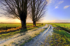 Trees along a lane at sunset in Holland Stock Photo