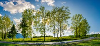 Trees along the mountain road in afternoon. Beautiful panorama of mountain landscape. turnaround of winding serpentine. lovely cloudscape on a blue sky. sun Stock Photo