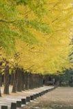 Trees along a path. A row of green trees along a walking path Royalty Free Stock Photos