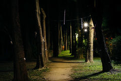 Trees along a path at night, in Da'an Park, in Taipei, Taiwan. Royalty Free Stock Images