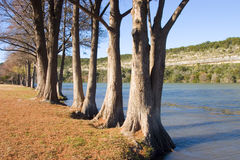 Trees along the river Royalty Free Stock Photo