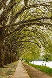 Trees along the river side in Ponte de Lima Royalty Free Stock Photography