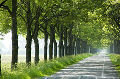 Trees along road Stock Images