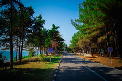 Trees along the road on the coast. Trees along the road on the coast of the Black Sea. background Royalty Free Stock Image