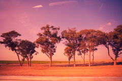 The trees along the road Royalty Free Stock Photography