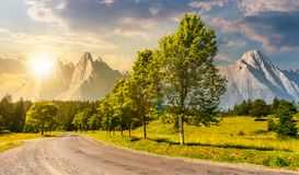Trees along the road in to the mountains at sunset. Composite mountainous landscape with rocky peaks. beautiful summer nature with gorgeous sky. travel and royalty free stock image