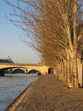 Trees along the Seine Stock Image