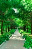 Trees along the shady alley in the summer park.  royalty free stock photo
