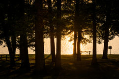 Trees along the shore of Lake Pinchot at sunset, Gifford Pinchot Stock Image