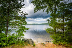Trees along the shore of Massabesic Lake, in Auburn, New Hampshi. Re royalty free stock image