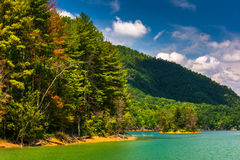 Trees along the shore of Watauga Lake,  Cherokee National Forest Royalty Free Stock Images