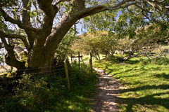 Trees along south west coast path in Dorset, UK. Scenery along UK's longest hiking trail called south west coast path in Dorset Stock Image
