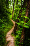 Trees along a trail through lush green forest in Codorus State Park Royalty Free Stock Images