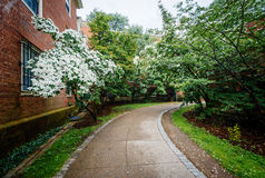 Trees along walkway and buildings at Brown University, in Provid Royalty Free Stock Images