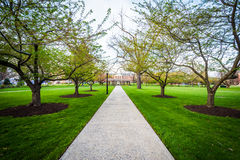 Trees along a walkway at Hood College, in Frederick, Maryland. royalty free stock image