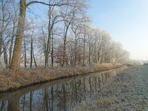 Trees along the water in winter Royalty Free Stock Photo