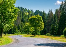 Trees along the winding road. Lovely nature scenery in summer time. travel by car concept Stock Images
