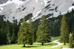 Trees in Alpine Valley Royalty Free Stock Photo