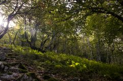Trees in an amazing forest. Amazing landscape of a forest Royalty Free Stock Images