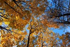 Trees&sky stock afbeelding