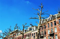 Trees in Amsterdam, Netherlands, Europe and colorful buildings Royalty Free Stock Image