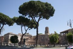 Pine stone pine Italian forums of Rome, Italy Stock Photos