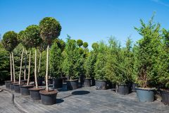 Free Trees And Bushes In Plastic Pots On Plant Nursery. Stock Images - 117794644
