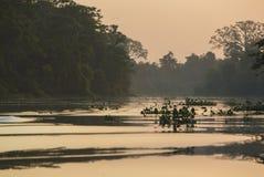 Trees And Jungle On The Catatumbo River, Lake Maracaibo, Venezue Royalty Free Stock Photo