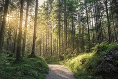 Trees And Path Of A Natural Area Of ​​the Bavarian Alps Royalty Free Stock Image