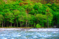 Trees And River Royalty Free Stock Photography