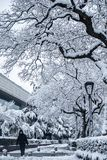 Trees And Streets Covered By Snow Stock Image