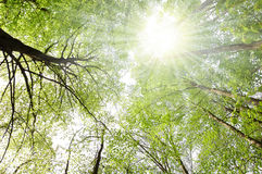 Trees And Sun Royalty Free Stock Images