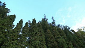 Trees ans blue sky. HD stock footage