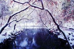 Trees arch over snowing river 2 Royalty Free Stock Photos
