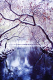 Trees arch over snowing river Stock Images
