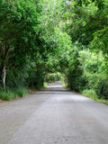 Trees Arching Over Road. Trees arching over a road create a tunnel through nature in a thick forest stock photo