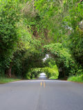 Trees Arching Over Road. Trees arching over a road create a tunnel through nature in a thick tropical rainforest royalty free stock photo