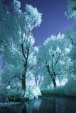 Trees around small pond in infrared light Stock Photo