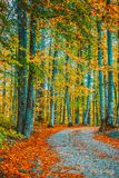 Trees around small road and dry leaves on  ground Stock Images