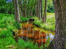 Trees around a small stream reflecting water in Central France Royalty Free Stock Photos