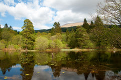 Free Trees Around The Loch Royalty Free Stock Image - 16808866